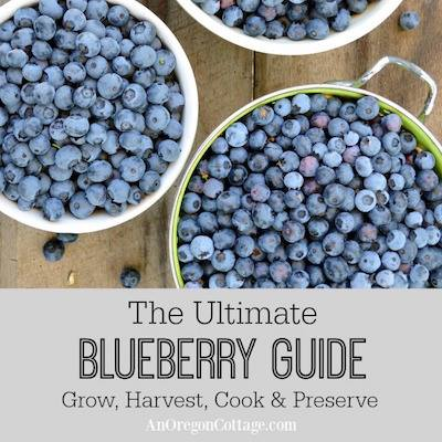 Bllueberry guide by An Oregon Cottage