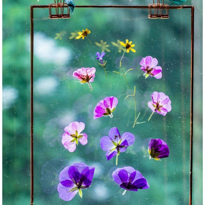 Pressed flower suncatcher in window