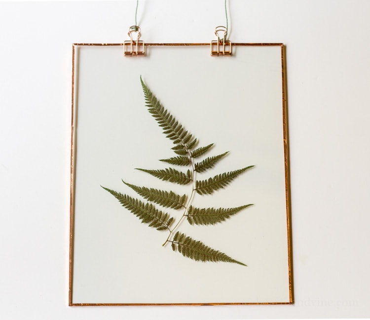 Fern suncatcher on white background.