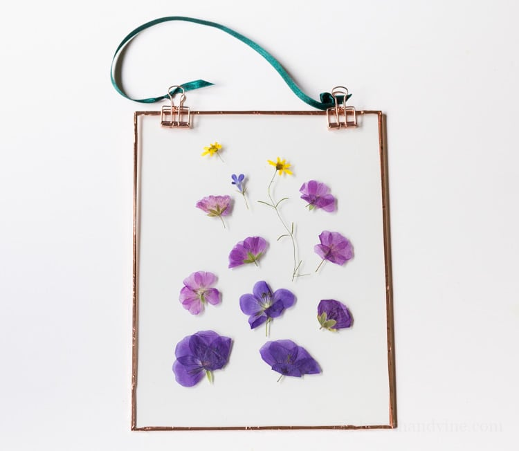 Flowers pressed between glass and hung.