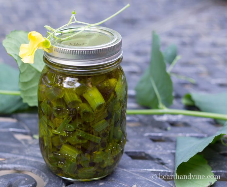 Jewelweed in olive oil.