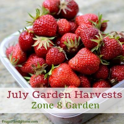 July garden harvests - Frugal Family Home