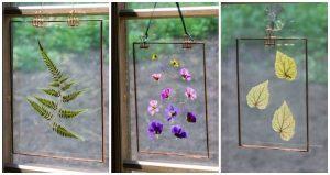 Pressed flower suncatcher trio in window.