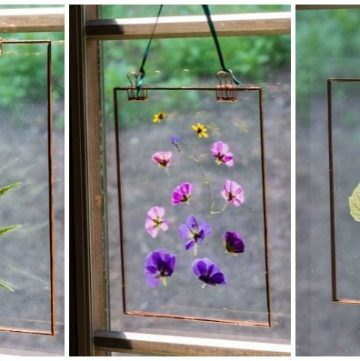 Pressed flower suncatcher trio in window.