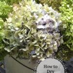 Bucket of hydrangea flowers.