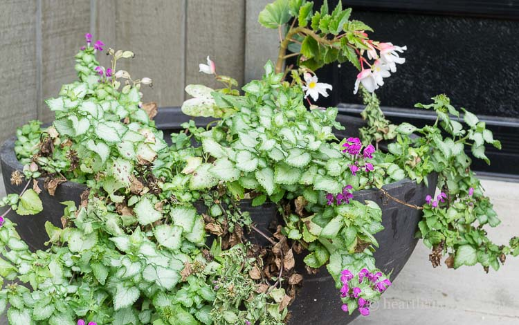 Fall planter ideas - spent summer container