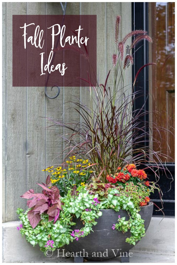 Fall container plants