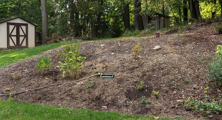 Plan a garden on a budget