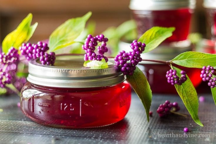 Beautyberry Jelly