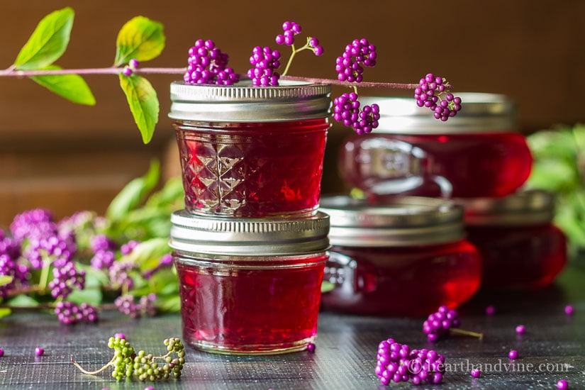 Beautyberry jelly can be made from the native American Beautyberry shrub and makes a stunning sweet gift for everyone on your list.