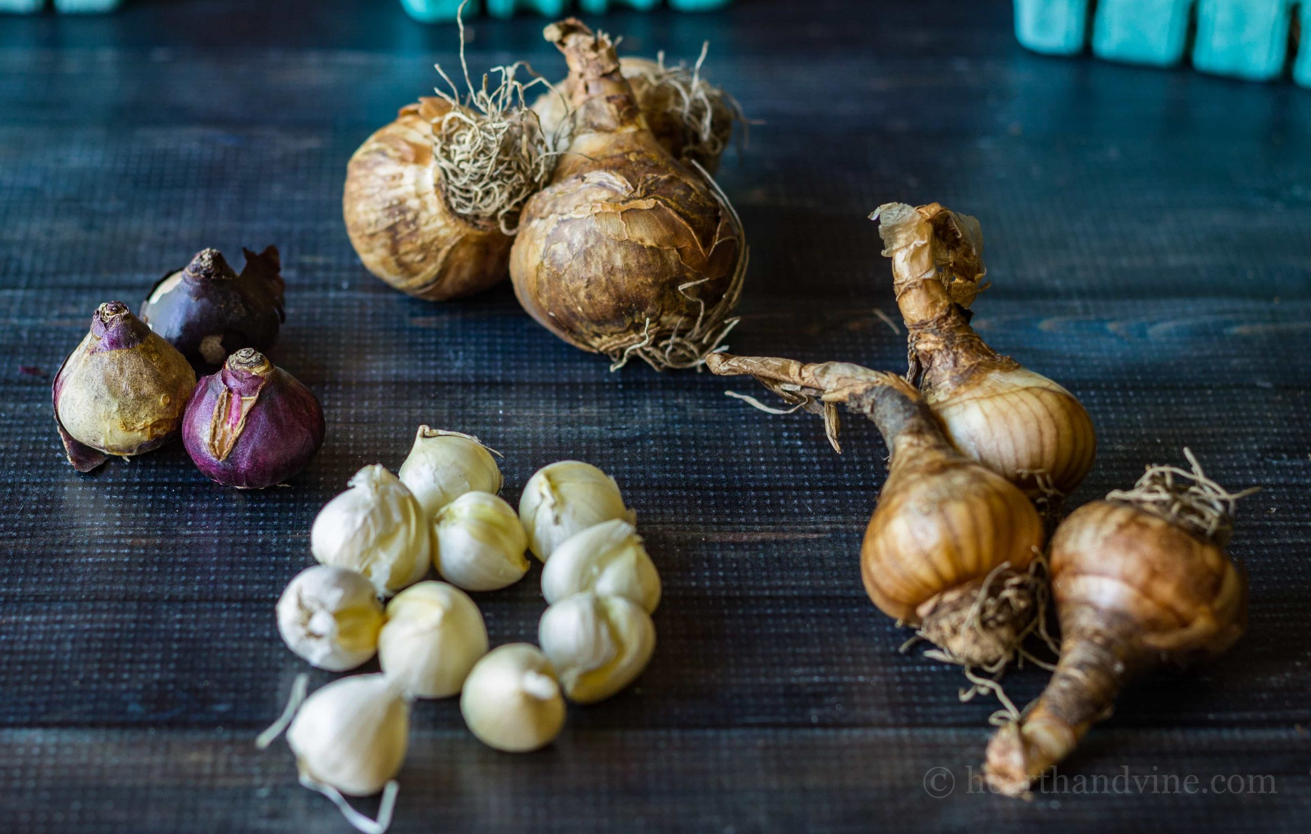 Deer Resistant Bulbs And For Your Spring Garden