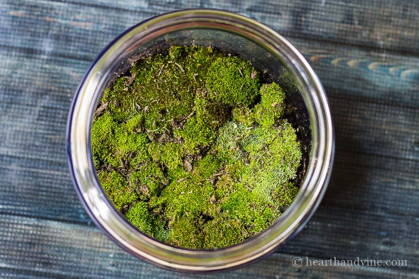 Moss view in fairy garden terrarium