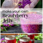 Three images. Top is a hand with beautyberries in palm. Second is a glass quart of beautyberries and the bottom is several jars of beautyberry jelly.