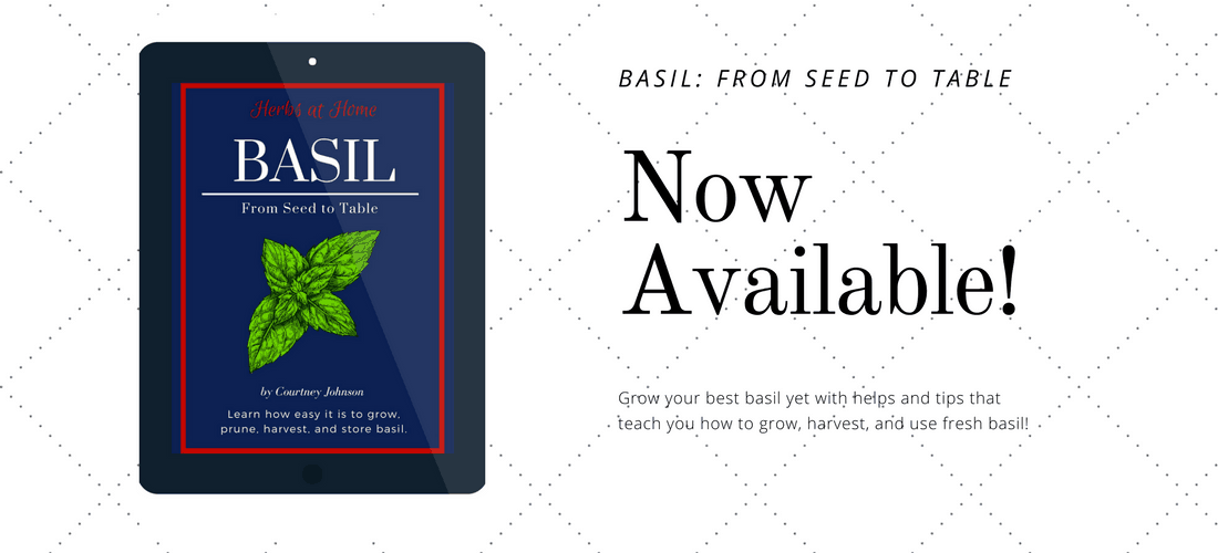 Basil book offer
