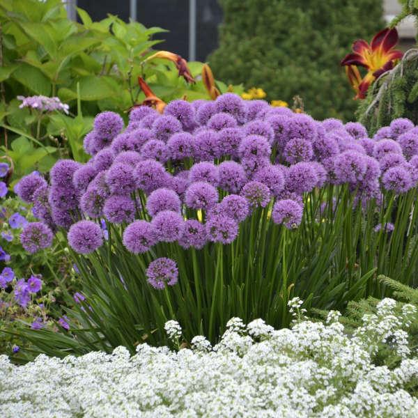 Perfect Photo Via Walters Garden Inc.