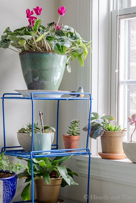 Plants for a better work environment