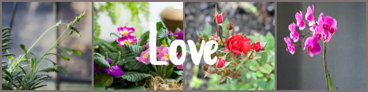 Houseplant symbolism - Plants for Love