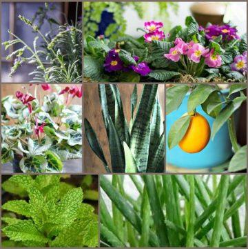 collage of houseplants