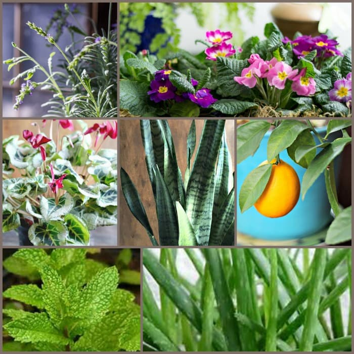 collage of houseplants
