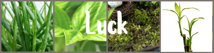 Collage of lucky plants