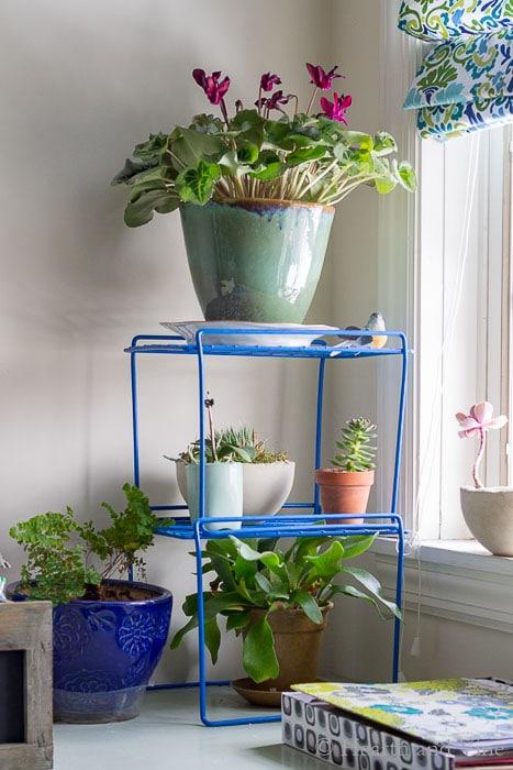 Organization hacks using locker shelves for vertical gardens.