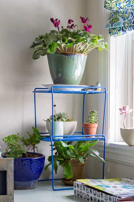 Organization hacks using locker shelves for vertical gardens.