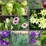 2018 Plants of the Year – Best Choices for the Garden