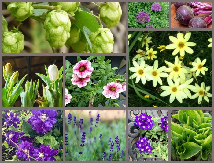 2018 Plants of the Year