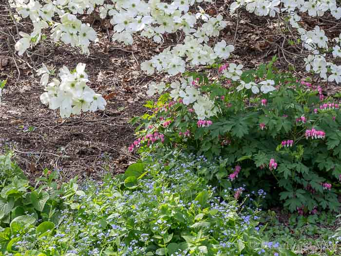 Spring garden plants in bloom