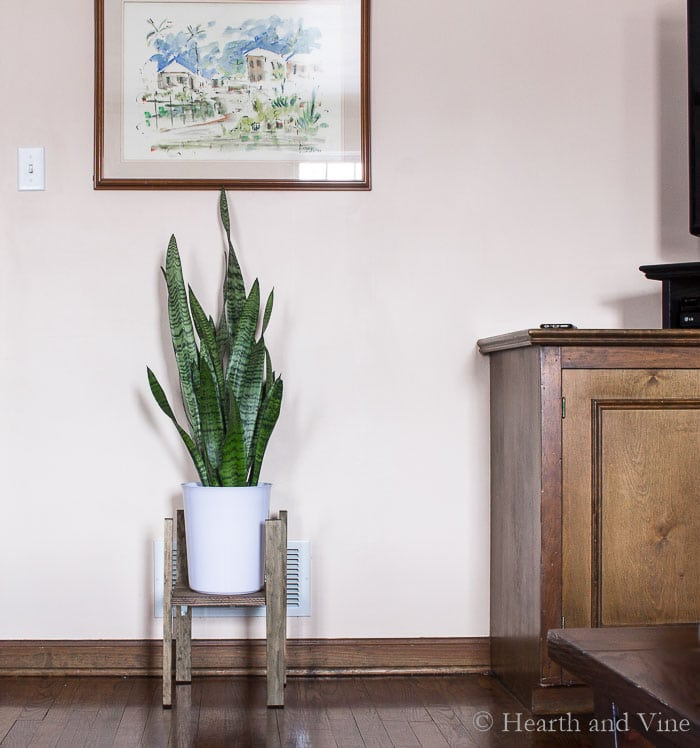 Modern plant stand in living area.