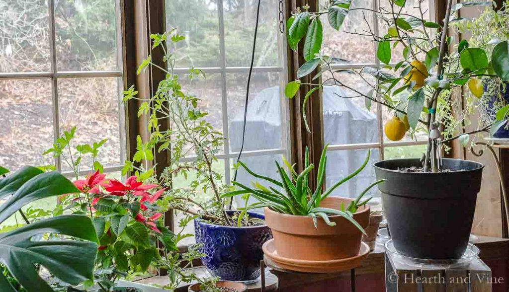 Indoor Gardening – The Simple Pleasure of Houseplants