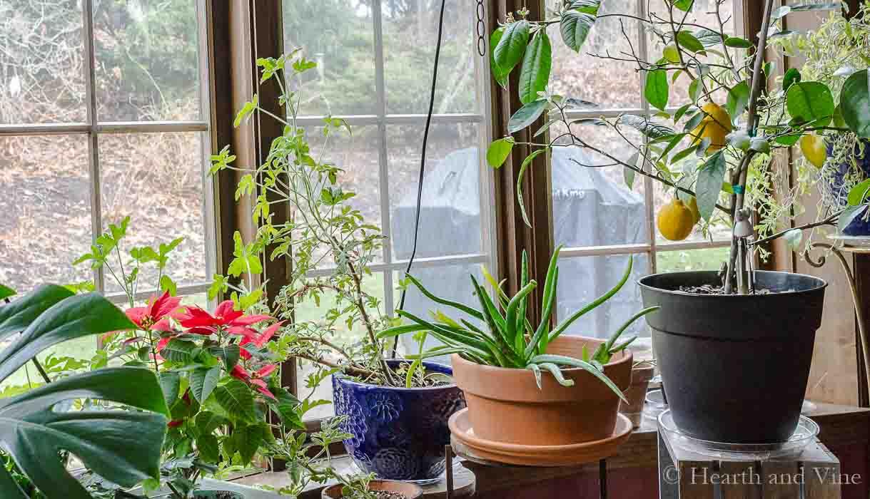 Indoor Gardening Plants Indoor gardening the simple pleasure of houseplants workwithnaturefo
