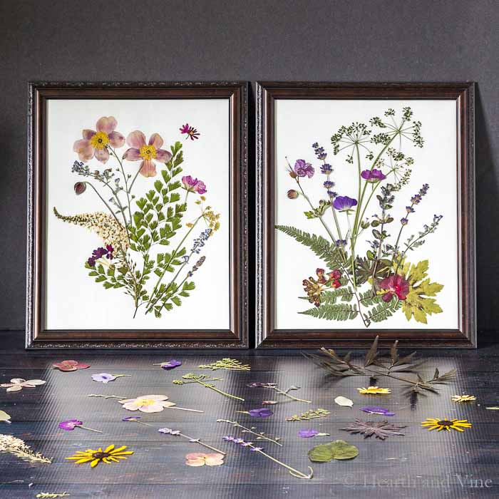 Pressed flower are in two dark frames.