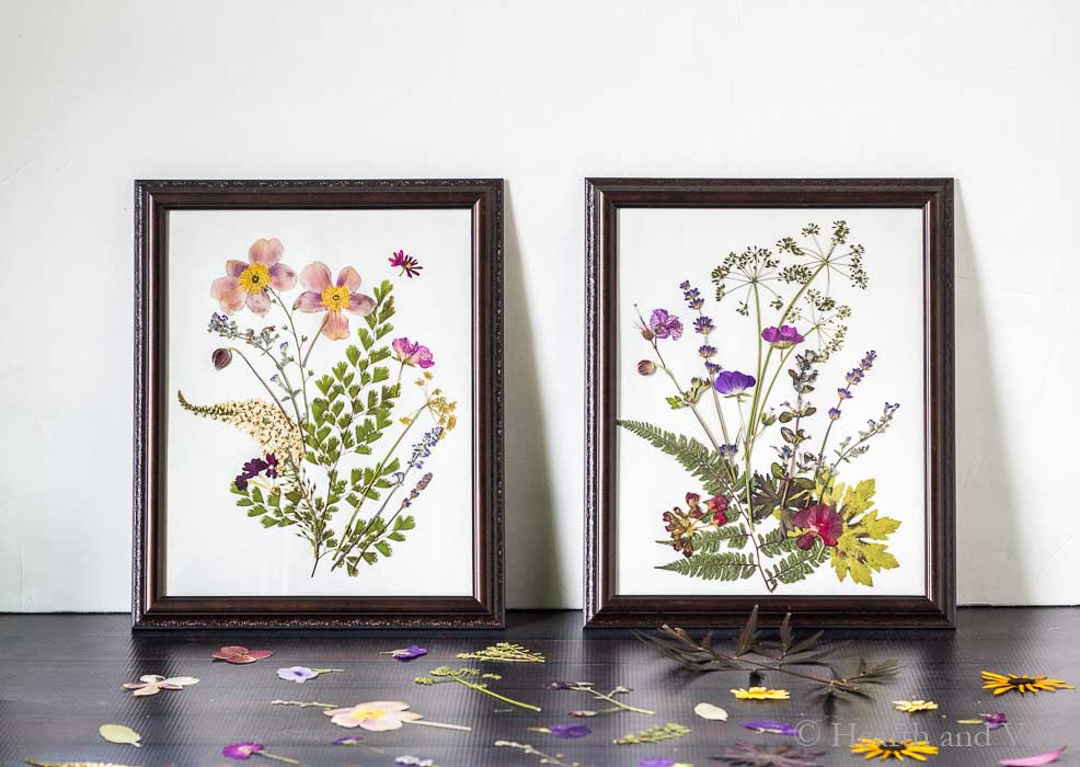 Pressed flower art in two frames with white background.