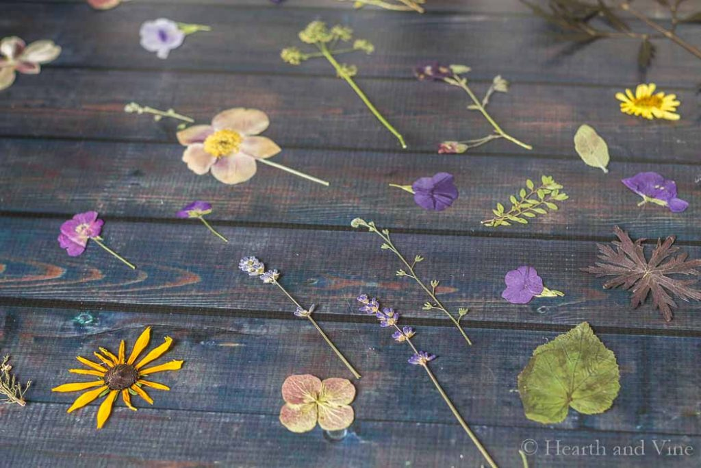 Pressed flowers on table.