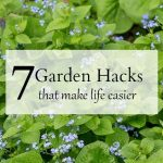 7 garden hacks overlay with brunnera
