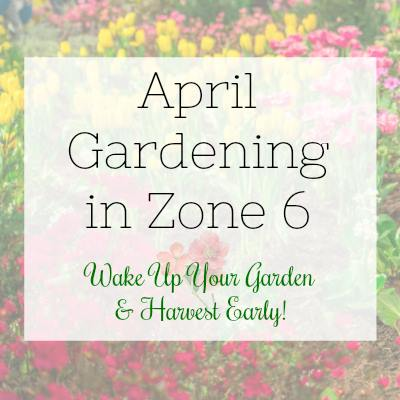 April gardening in zone 6 Angie