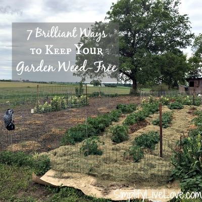 Ways to keep your garden weed free