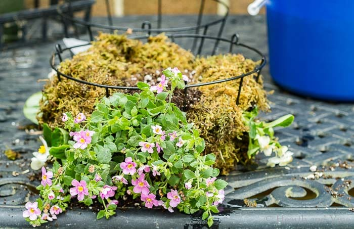 Add more flowers in planter