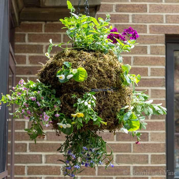 A Hanging Moss Globe Flower Planter That Will Make You Smile