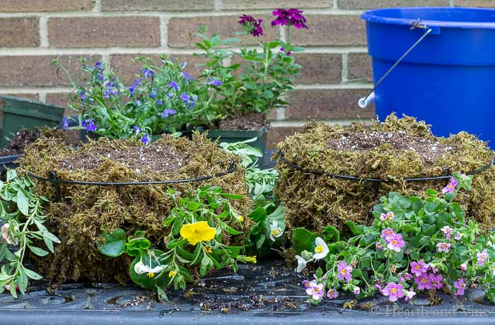 Planted baskets with moss soil and flowers