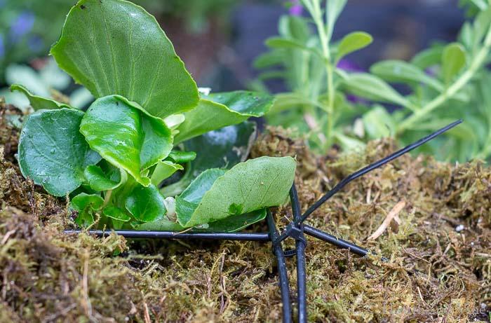 Using zip ties to create globe planter