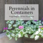 Perennials for Containers – Frugal Ways to Fill Your Flower Pots