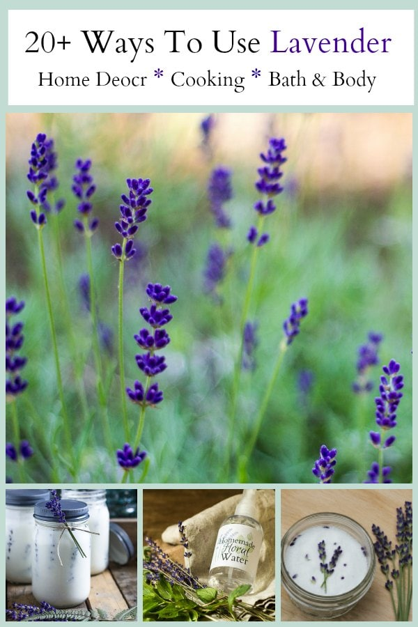 Learn more than 20 lavender uses for your home, including recipes from the kitchen, crafts for the home, and several pampering bath and body DIYs.
