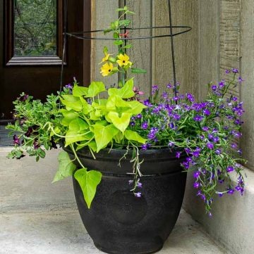 Flower pot trellis closeup
