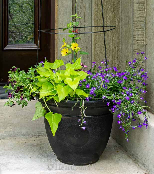 Flower pot trellis closeup