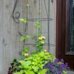 Flower pot with metal trellis