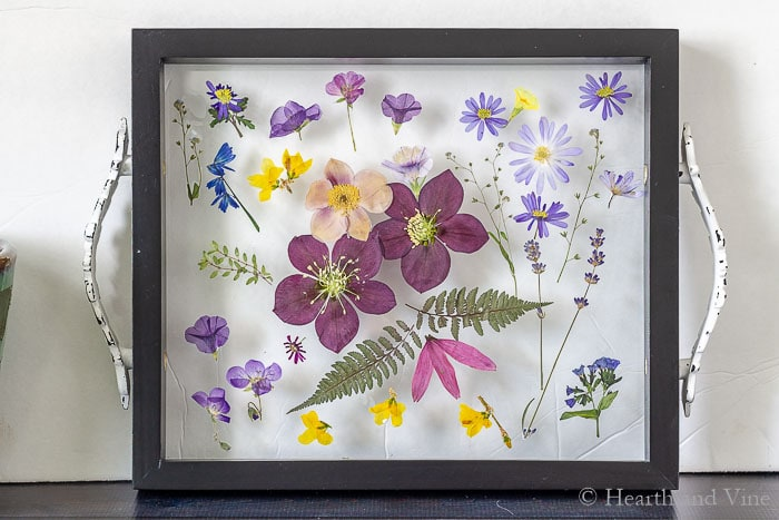 Glued pressed flowers on to glass