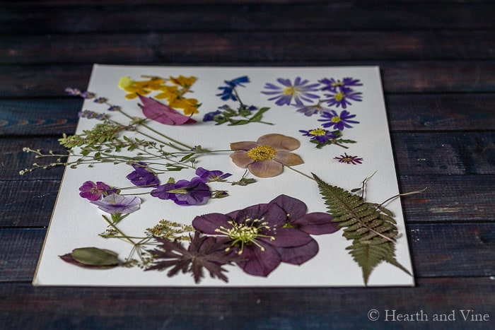 Assorted pressed flowers
