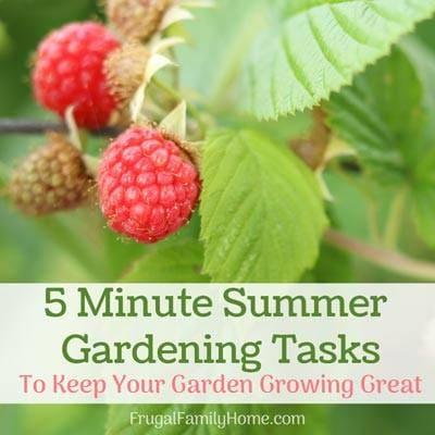 Summer garden tasks